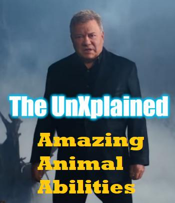 An image of Countdown To The New UnXplained Episode Amazing Animal Abilities